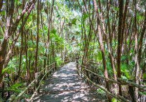 Belize Jungle | Tami McVay - Wellness & Lifestyle Coach